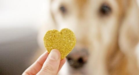 Laktosefrei & getreidefrei: Haferflocken Kürbis Kekse für Hunde