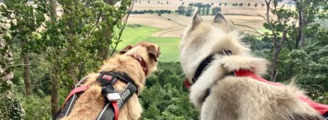 Ith-Hils-Weg Dogtrekking