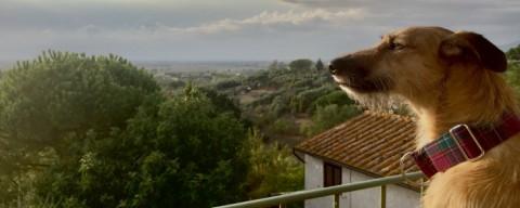 La Casa Toscana – Eine hundefreundliche Unterkunft