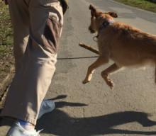 Hund und Job – wie geht das? Part 3 [miDoggy Parade]