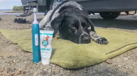 Im Test: emmi®-pet Ultraschall-Zahnbürste für Tiere | Werbung