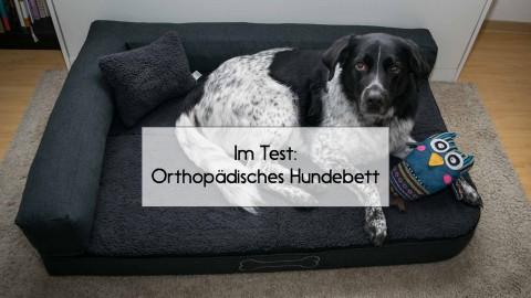 Im Test: Orthopädisches Hundebett von Homeoutfit24