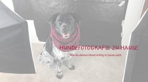 Den Hund zu Hause fotografieren: So geht's!