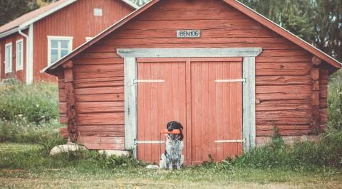 Mit dem Hund nach Schweden