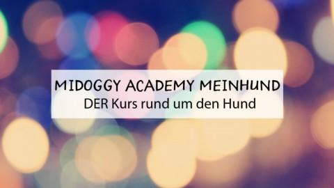 miDoggy Academy: DER Kurs rund um den Hund