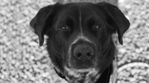 Nikon 35 mm in der Hundefotografie