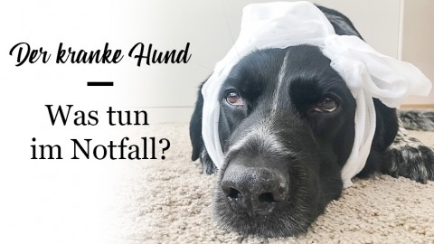 Gesundheit auf Reisen mit Hund (Werbung)