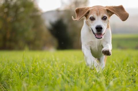 Den Hund in Bewegung fotografieren