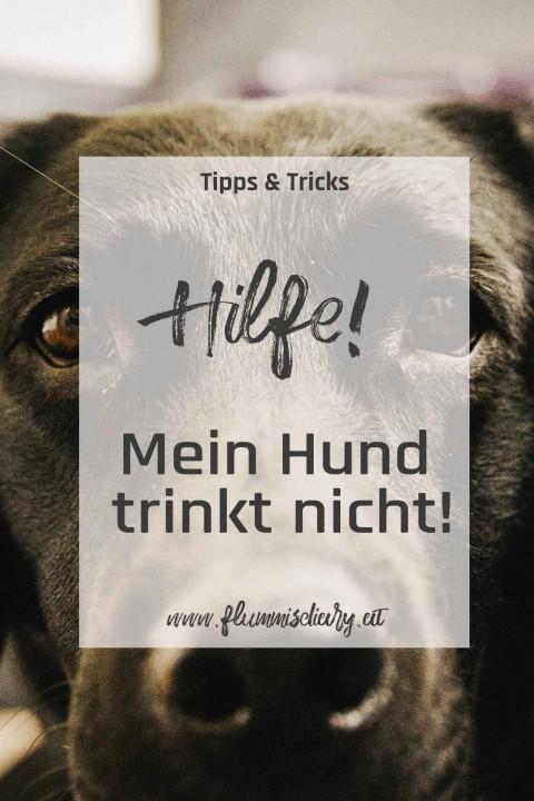 Hilfe mein Hund trinkt nicht – Tipps um euren Hund zum Trinken zu bringen