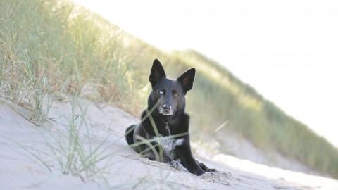 Strandurlaub mit Hund in Nordholland