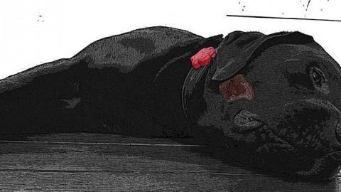 Was ist ein Hotspot beim Hund?