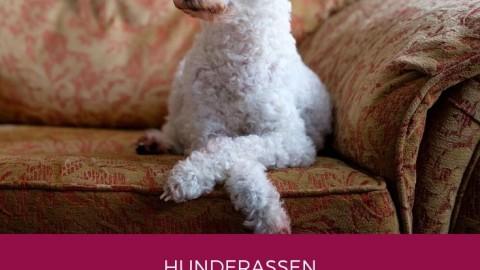 Hunde als Status- oder Fashion-Symbol