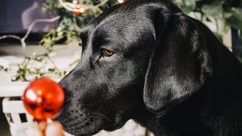 Monatspfoto: Der Weihnachtswichtel ist am Werk