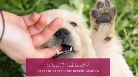 Dein Hund beißt? So trainierst du die Beißhemmung mit ihm