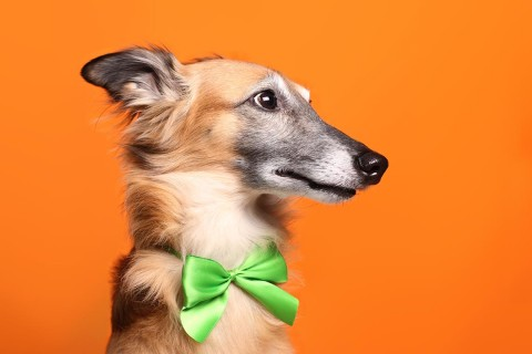 Silvester-Angst beim Hund: Was Merlin wirklich hilft