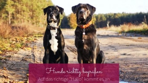 """Hunde begrüssen: Auf das richtige """"Hallo"""" kommt es an!"""