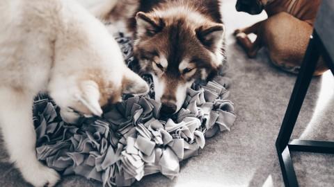 DIY: Schnüffelteppich für Hunde selber machen? So geht's!