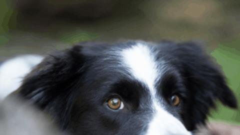 Tipps für das Fotoshooting mit Hund von Wau-Effekt