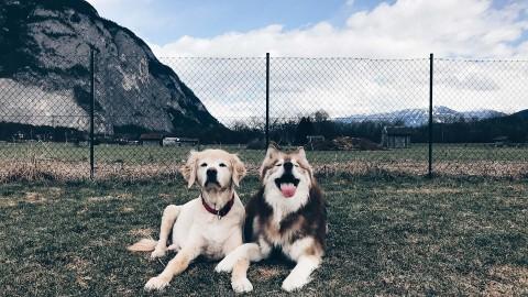 Die Hunde Netiquette: Regeln für Hundehalter und ein angenehmes Miteinander!