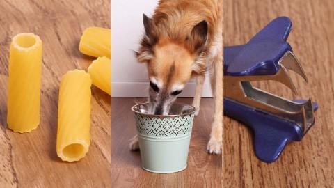 10 erstaunliche Lifehacks, Tipps und Tricks für Hundefreunde