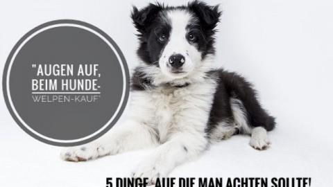 """""""Augen auf beim Hunde-Welpen-Kauf"""" – 5 Dinge, auf die man achten sollte"""