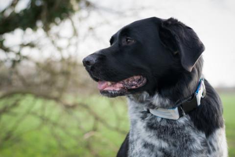 Herz vs. Verstand: Wer gewinnt in der Hundeerziehung?
