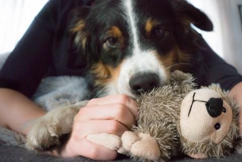 Milchtritt beim Hund – was ist das?
