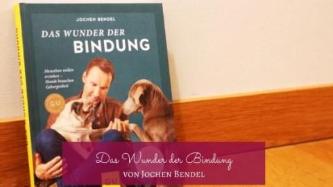 """Buchtipp: """"Das Wunder der Bindung"""" von Jochen Bendel"""