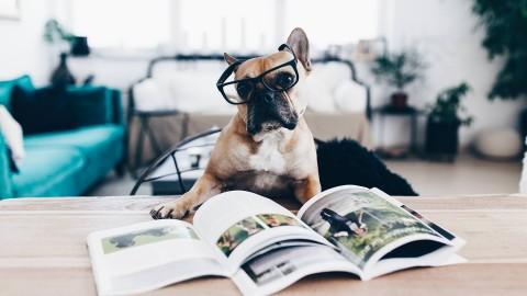 Meine 3 Hundebücher Empfehlungen zum Thema Mehrhundehaltung!