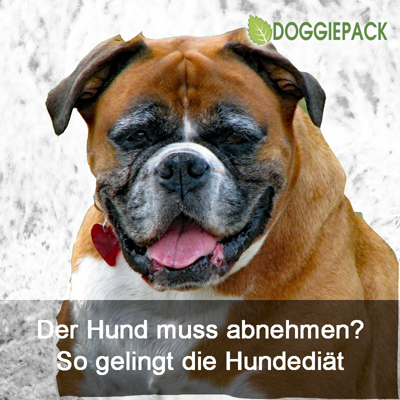 hundediaet_doggiepack
