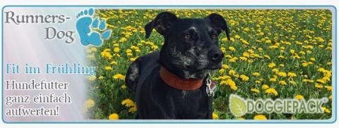 Fit im Frühling – Hundefutter ganz einfach aufwerten!