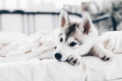 Wie entferne ich Hundehaare am besten? Meine 7 effektiven Tipps!