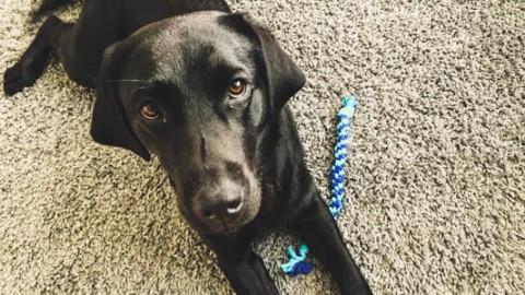 Spielzeug für Hunde: DIY Kauspielzeug