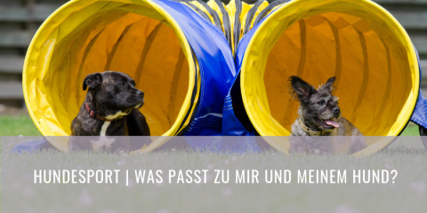 Hundesportarten – Doch welche passt zu meinem Hund? (Part 1)