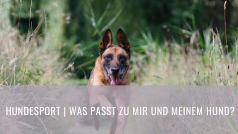 Hundesportarten – Doch welche passt zu meinem Hund? (Part 2)