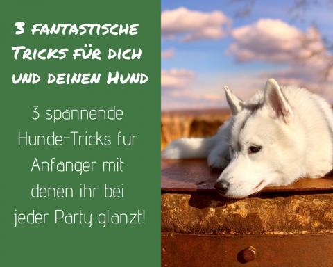 3 außergewöhnliche Hunde-Tricks für Anfänger