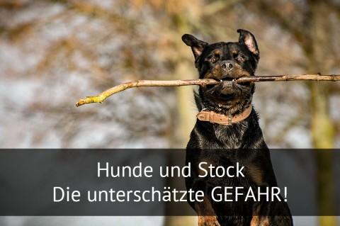 Hunde und Stock – Die unterschätzte Gefahr!