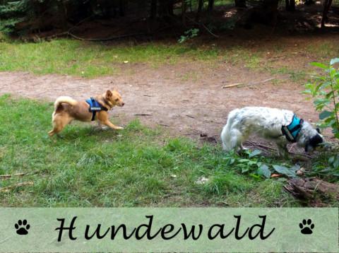 Ausflug in den Hundewald