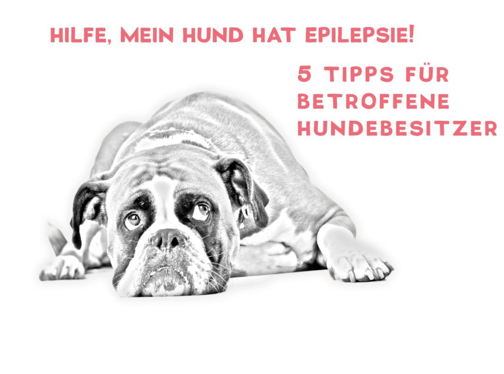Epilepsie bei Hund Tipps für betroffene Hundebesitzer