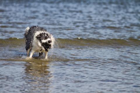 Mit Hund in Urlaub – die Kehrseite der Medaille