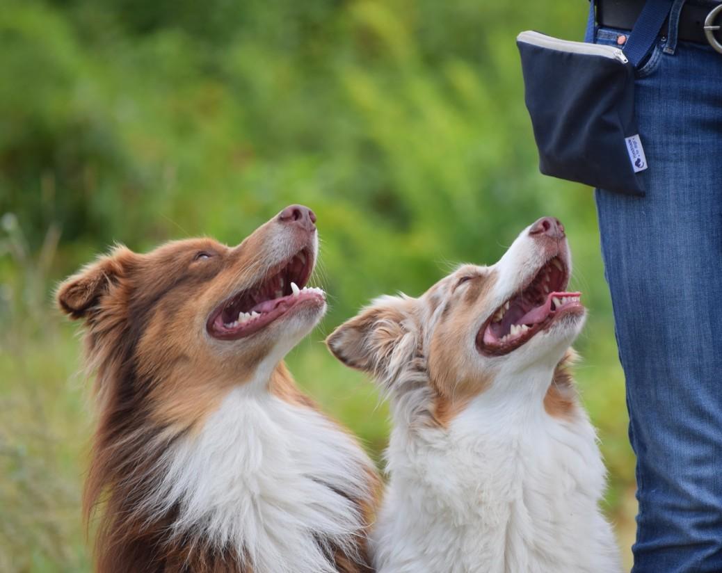 Futterbeutel Handmade for dogs Erfahrungen