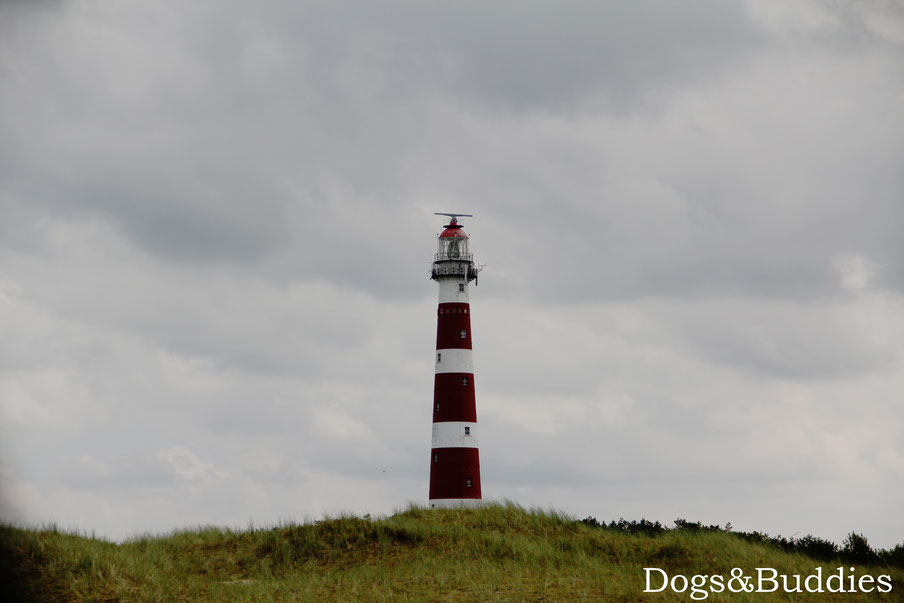 Dogs & Buddies Reisen: Pfannkuchen mit Aussicht auf Ameland