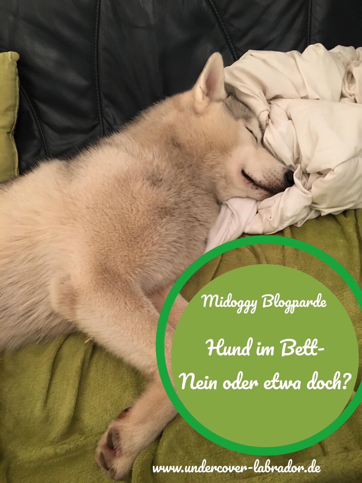 Hund im Bett Nein oder etwas doch?