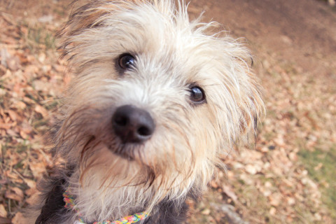 Hund und Job – Wie geht das?