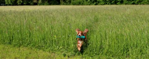 Dummytraining – 6 Ideen für den täglichen Spaziergang