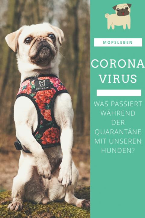 [Gesundheit] Coronavirus – Was passiert mit Wuffi während der Quarantäne?