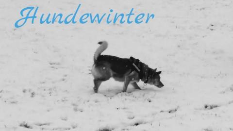 Buchrezension: Hundewinter von K. A. Nuzum