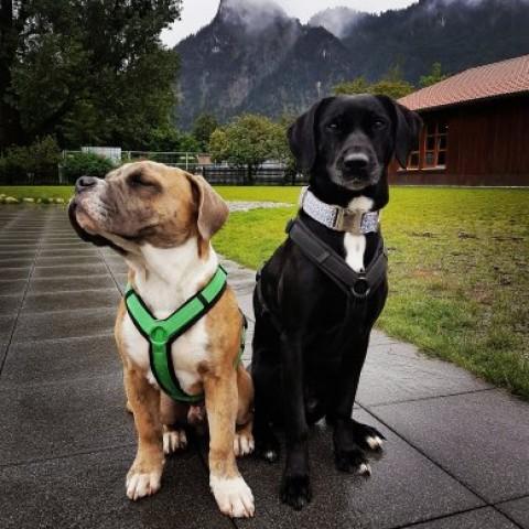 Blogparade – Insidertipp: Wo lohnt sich 2018 der Urlaub mit Hund?