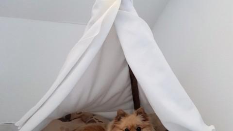 DIY Hunde-Tipi