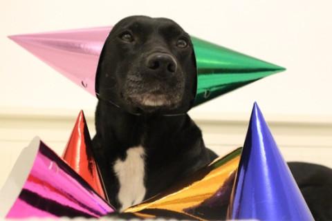 1 Jahr – Nicht noch ein Hundeblog